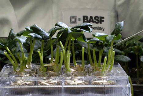 BASF SE VP 822_The_search_for_innovative_crop_protection_actives Foto © BASF SE