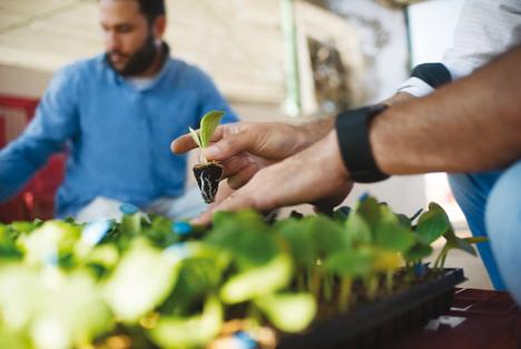 Gemüsesaatgut Foto © Bayer AG
