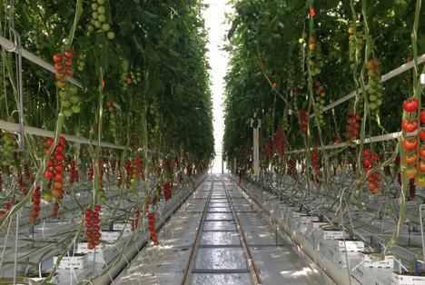Bayer Tomaten-Demogewächshaus. Foto © Bayer AG