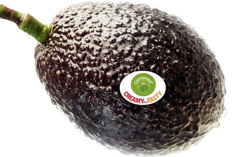 Camposol Avocados
