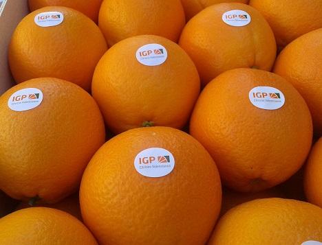 Citrus Valencianos Sticker