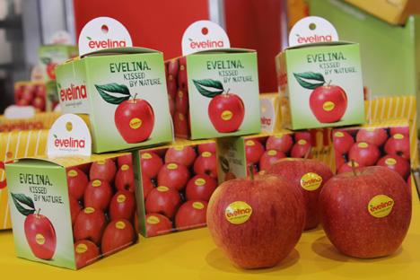 Evelina® zählt weiter zu den ertragreichsten Club-Sorten Deutschlands
