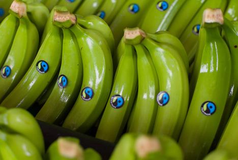 Foto: © Fairtrade Bananen siegel Quelle TransFair eV_Tobias Thiele