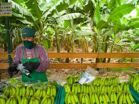 Foto © Santiago Engelhardt / Fairtrade