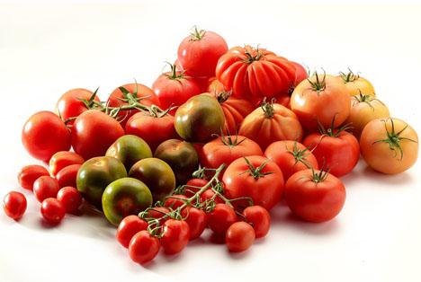 Flandria Gemüse des Monats Mai: Tomate! Lose, Strauch, Romatomaten und Spezialitäten