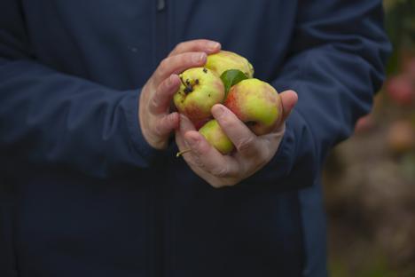 Zero Waste bei Pink Lady heißt, dass alle Früchte verwertet werden. Quelle: Pink Lady Europe / Moissac