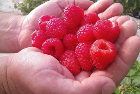 Special Fruit Himbeeren