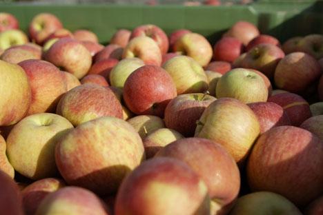Suedtiroler Apfel ggA