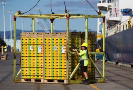 Neuseeländische Kiwi-Saison 2017 hat begonnen: erstes Schiff legt Richtung China ab