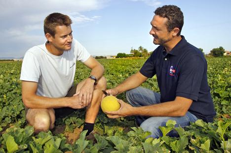 Bayer Galkia Melone Anbau
