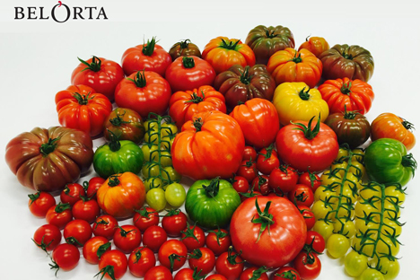 BelOrta Tomaten