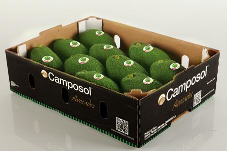 Camposol: Auf dem Weg zum ganzjährigen Avocadoangebot