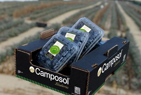 Camposol peru Blueberries in box