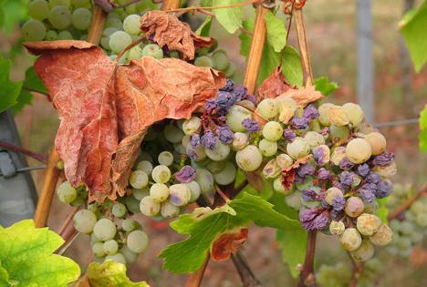 Rosinen grape dried Image by Uschi Dugulin from Pixabay com 2018