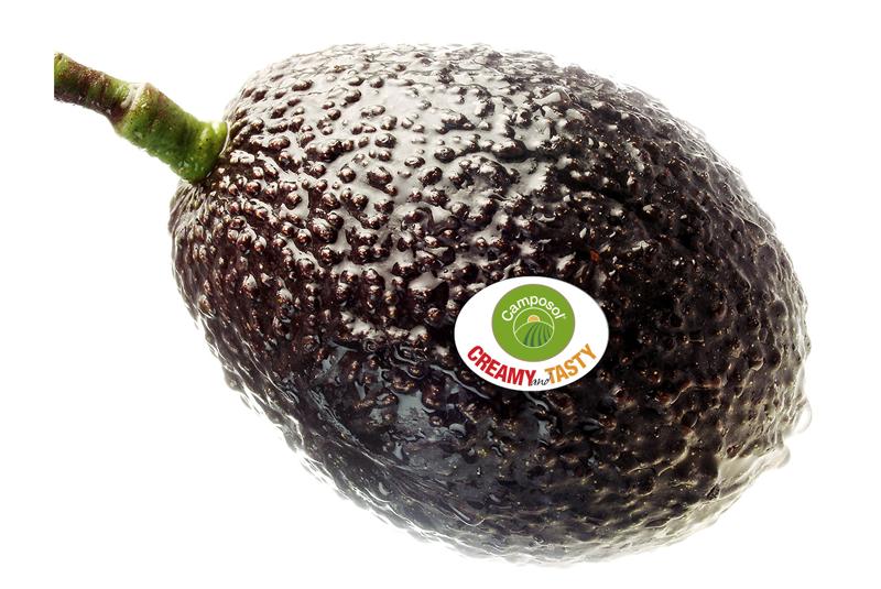 Hass avocado. Quelle © camposol