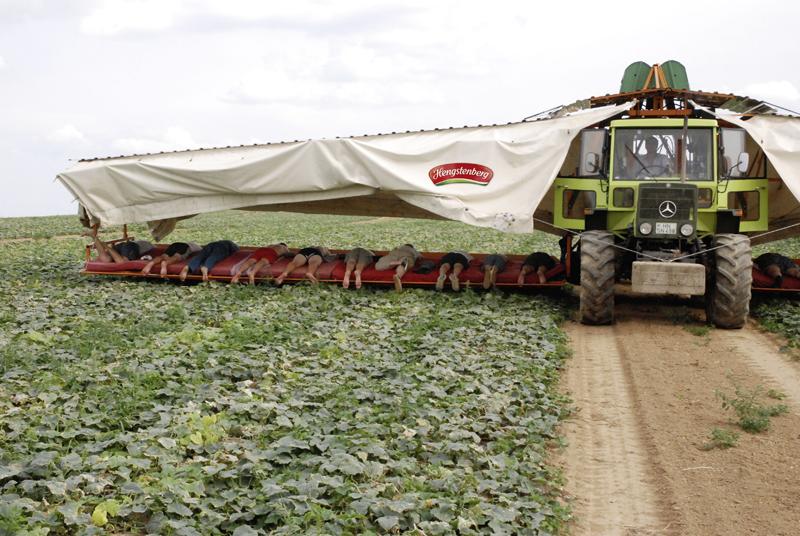 Gurken aus deutschem Vertragsanbau bei Hengstenberg - Genuss aus der Region wird teurer