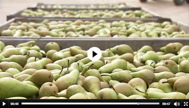 Belgien: 20 Prozent Umsatzverlust bei Aepfel und Birnen
