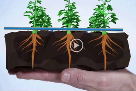 Bild Video: Bayer Crop Science und Netafim entwickeln intelligenten neuen Bewässerungsansatz