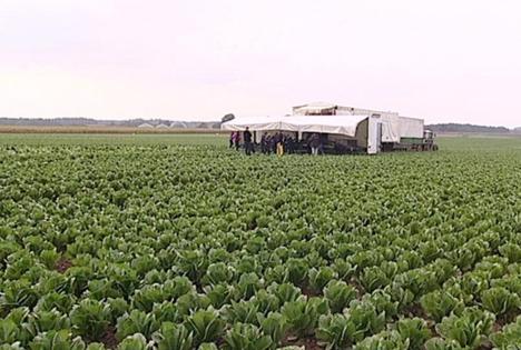 TV-Tipp: BEHR AG - Gemüse frisch vom Feld