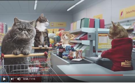 Netto landet Viral-Hit mit Werbespot: Katzen im Supermarkt