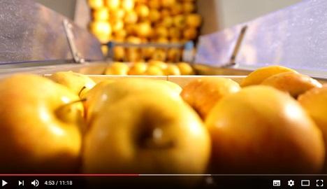 Gerettetes Obst (Bild: VDI ZRE)