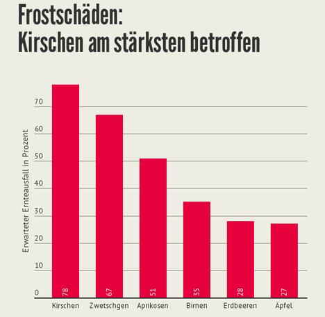 Quelle Grafik: Schweizer Obstverband. (Angaben sind provisorisch, gechätzte Fehlerquote: 30%)