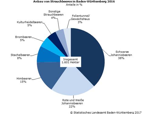 Statistik BW Schaubild 1: Anbau von Strauchbeeren in Baden-Württemberg 2016
