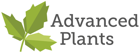 Advanced Berry Breeding B.V. Advanced Plants B.V. logo
