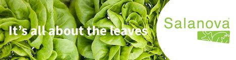 Rijk Zwaan Salat