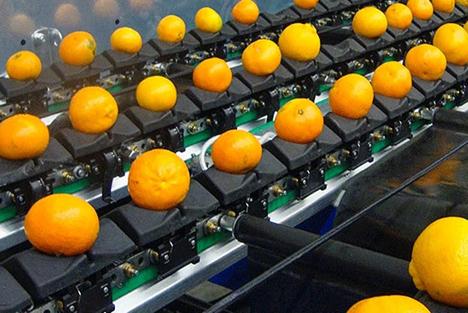 Sortiersystem Fruit Logistica