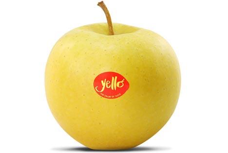 """yello® – The Color of Taste"""". Foto © VI.P / VOG, Italien"""