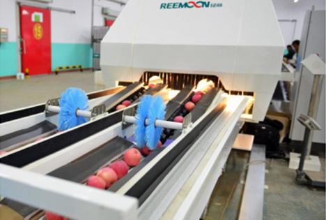 Frucht-Farbsortierer. Foto Jiangxi Reemoon Technology Holdings Ltd