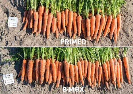 """Spotlight"" Messepremiere: B-Mox-Karotten - Bejo Zaden B.V."