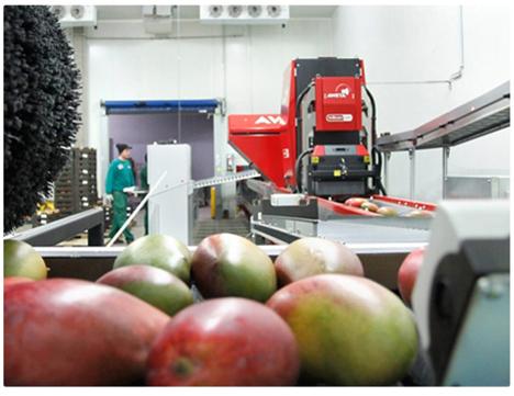 Spotlight Messepremiere: Foto BioTropic GmbH Mango-Sortiermaschine