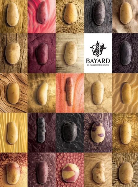 Spotlight: Kartoffel-Vielfalt.Foto © Bayard Distribution