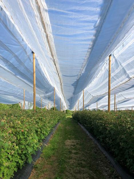 Fruit Logistica Spotlight: System zum Sammeln von Regenwasser. Foto © Messe Berlin