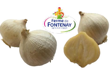 Ferme de Fontenay hat eine neue Knoblauchsorte