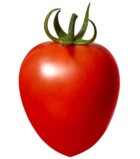 Tomate Gochiso PR-7. Foto © Takii