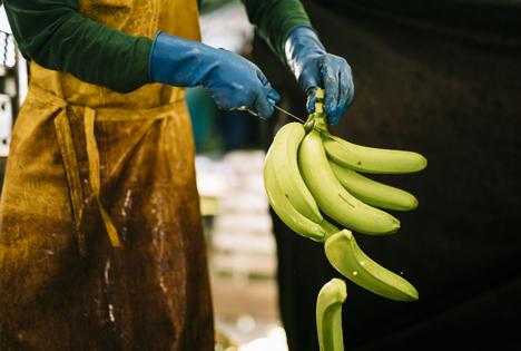 Bananen werden für den Transport vorbereitet. Foto © Fairtrade | Christoph Köstlin