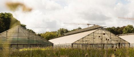 Gewächshäuser der Stadtfarm im Landschaftspark Herzberge (Bild: Julia Schmidt)