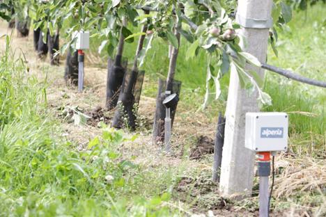 Bodenfeuchtesensor in einer Anlage. Foto © Versuchszentrum Laimburg
