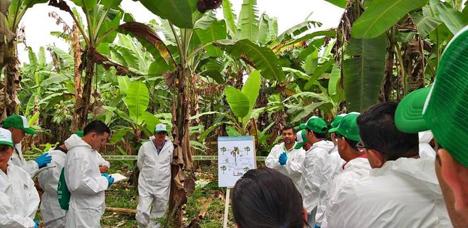 Lernen, wie die Krankheit in Ecuador erkannt werden kann. Foto © FAO/Jose Saavedra