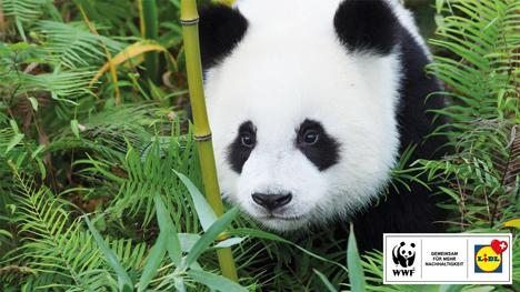 Foto © Lidl Schweiz/WWF