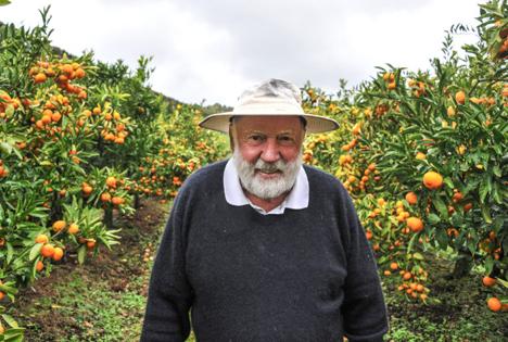 Tony Gibbs on his mandarin orchard in 2019. Foto © T&G Global
