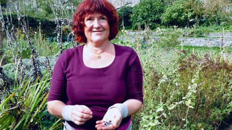 Eva-Maria Schüle erntet im Herbst die Samen fürs nächste Frühjahr. Foto ©  obs/ZDF/Christina Voges