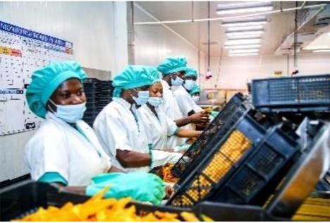 Allianz für Produktqualität in Afrika. Foto © DFHV