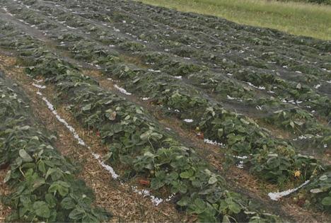 Österreich: Erster schwerer Hagel trifft die Landwirtschaft - 2 Millionen Euro Schaden