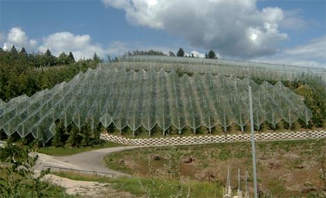 Provinz Trentino unterstützt Netze gegen Hagel und Insekten. Foto © Provinz Trentino