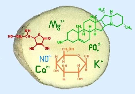 Inhaltsstoffe; Graphische Darstellung einer Kartoffel mit den Formeln der Inhaltsstoffe. Foto © LfL