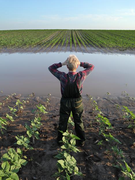 Werden Ernteausfälle die Essgewohnheiten der Menschen verändern? Foto © Rabobank Deutschland